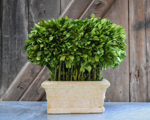 Preserved Boxwood Topiary Loaf
