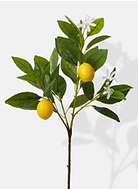 Lemon Tree Pick - 23""