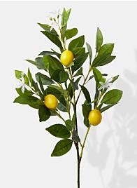 Lemon Tree Pick - 30""