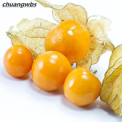 - 200pcs Physalis Peruviana Delicious Fruit Golden Berry Seeds Chinese Latern Plant Gooseberry Bonsai Plant Easy Grow Fruit Seeds - Default Title  jetcube