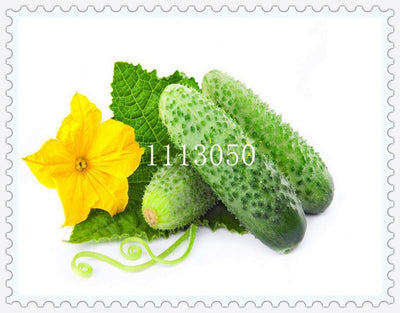- 100 pcs japanese mini cucumber vegetable seeds organic NO-GMO seeds for home garden -   jetcube