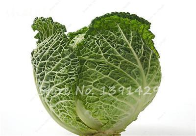 - 100 pcs/bag Giant Cabbage Seeds, Rare Russian Cabbage Seeds, Organic, Non-GMO Vegetable Seeds for Home & Garden - 21  jetcube