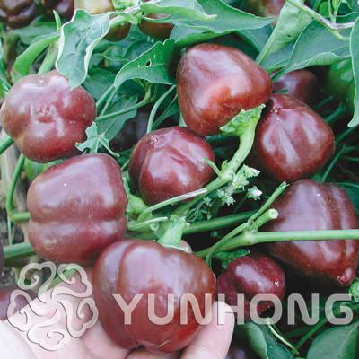 "- 100% True Giant 100 Pepper Seeds Giant Marconi Hybrid ""Giant Pepper , DIY Home Garden Vegetable Plant Free Shipping -   jetcube"