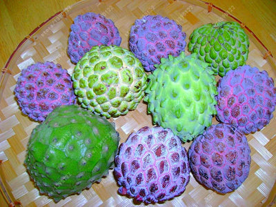 - 10 pcs Soursop fruit, (graviola annona muricata), Multi-color sweetsop seeds Delicious fruit seeds sugar apple plant in bonsai -   jetcube