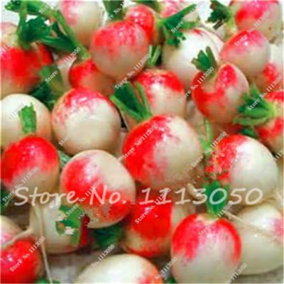 - 100 Pcs Sweet Rainbow Radish Seeds Vegetables Seed,Non-Gmo Vegetable Seeds,Bonsai Seeds,Garden Nutritious Fruits Planting -   jetcube