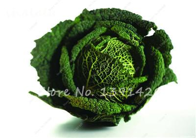 - 100 pcs/bag Giant Cabbage Seeds, Rare Russian Cabbage Seeds, Organic, Non-GMO Vegetable Seeds for Home & Garden - 17  jetcube
