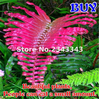 - 100pcs Garden Fern Seeds Rare Creeper Vines Grass Seed Mixed Rainbow Foliage Plants For Bonsai Plant 2017 New Sementes Sale . - Multi-Colored  jetcube