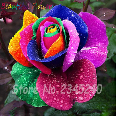 - 120PCS Flower Seed Holland Rose Seed Lover Gift Orange Green Rainbow RARE 23 Color To Choose DIY Home Gardening Flower - 6  jetcube