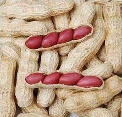 - 10 seeds / pack, Chinese 4 pcs Peanut Seeds in one Shell , Red Skin Organic Rare Heirloom Peanut, germination rate 95% -   jetcube
