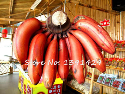 - 200 Pcs Very Rare Rainbow Banana Seeds Outdoor Perennial Interesting Plants Milk Taste Delicious Fruit Seeds For Home & Garden -   jetcube