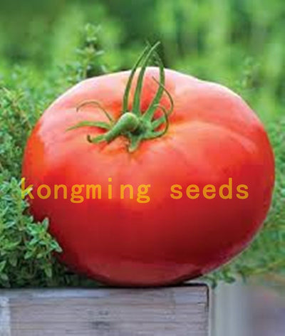 - 200 pcs Super Rare Red Giant Competition Russian Heirloom Tyazeloves Tomato seeds vegetable seeds for garden plant NO-GMO - Default Title  jetcube