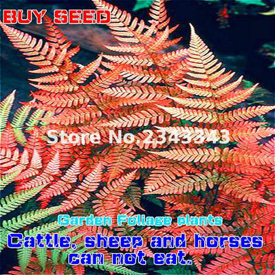 - 100pcs Garden Fern Seeds Rare Creeper Vines Grass Seed Mixed Rainbow Foliage Plants For Bonsai Plant 2017 New Sementes Sale . - Clear  jetcube