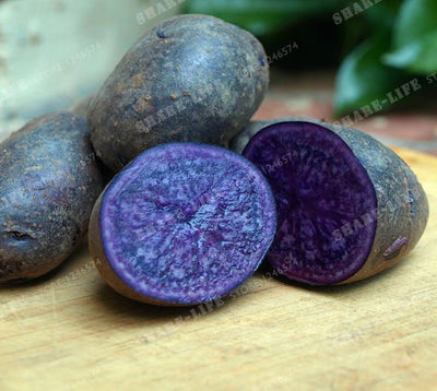 - 200pcs High Quality Potato Seeds Rare China High-nutrition Purple Potatoes Fruit And Vegetable Seeds For Home Jardin Planters -   jetcube