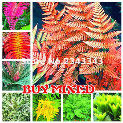 - 100pcs Garden Fern Seeds Rare Creeper Vines Grass Seed Mixed Rainbow Foliage Plants For Bonsai Plant 2017 New Sementes Sale . - Yellow  jetcube