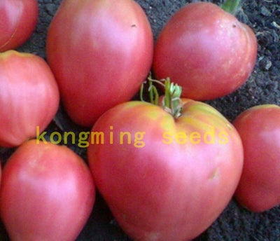 - 200 pcs Super Rare Red Giant Competition Russian Heirloom Tyazeloves Tomato seeds vegetable seeds for garden plant NO-GMO -   jetcube