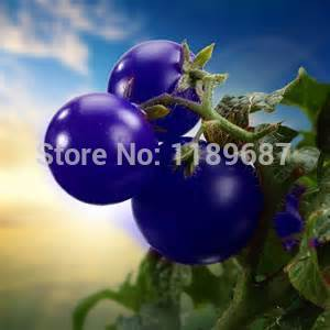 - 200pcs/bag tomato seeds purple cherry tomato Organic fruits seeds vegetables Healthy green food plant for home garden -   jetcube
