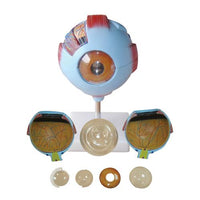 66fit Giant Eye Model