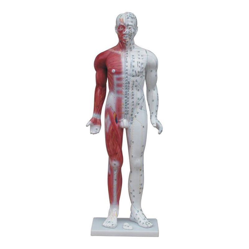 66fit Deluxe Acupuncture Male Model - 84cm