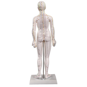 66fit Acupuncture Female Model - 48cm