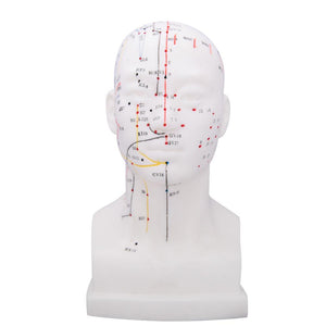 66fit Head Acupuncture Model