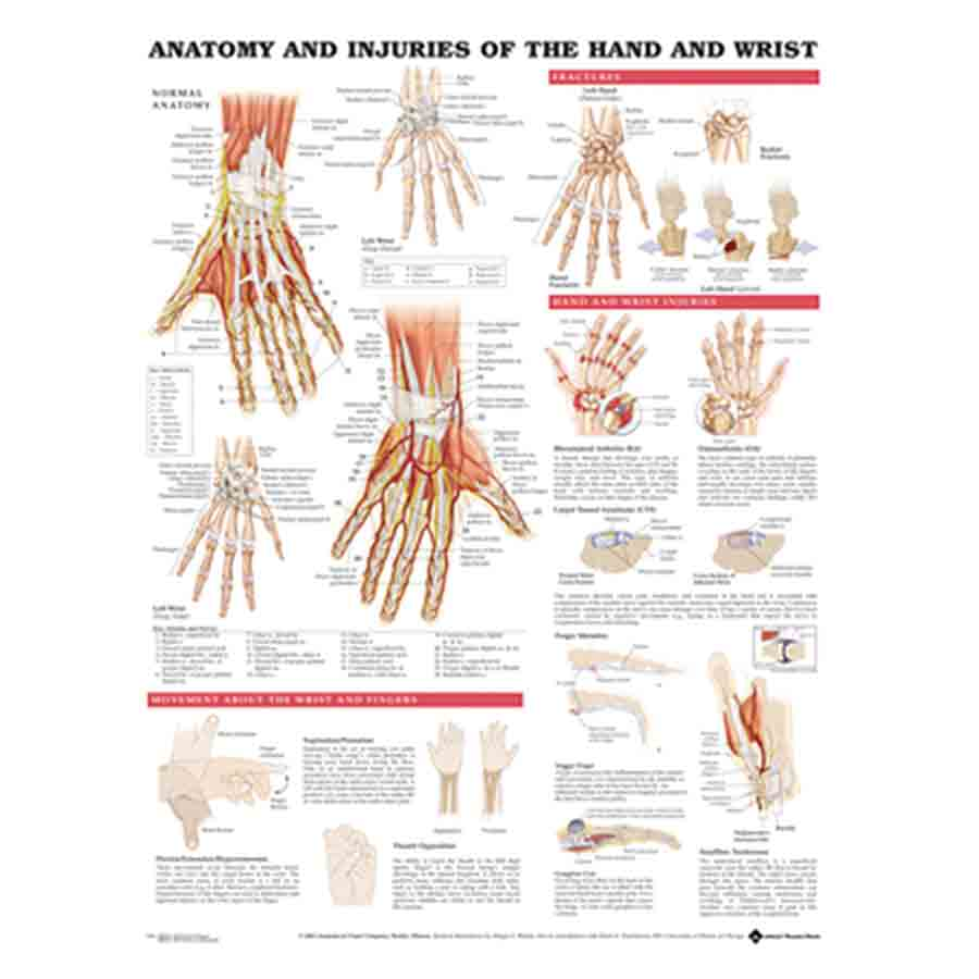 CHART ANATOMY & INJURIES OF THE HAND & WRIST