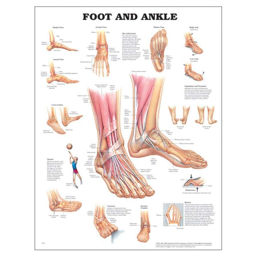 CHART FOOT AND ANKLE