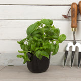 Garden - Dearhome Magnetic Plant Pot - Black