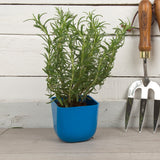 Garden - Dearhome Magnetic Plant Pot - Dark Blue