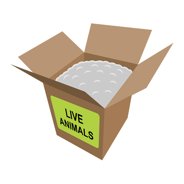 live-animals-empty-box2_With_Peanuts_grande