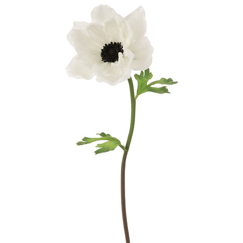 White Anemone Flower Stem