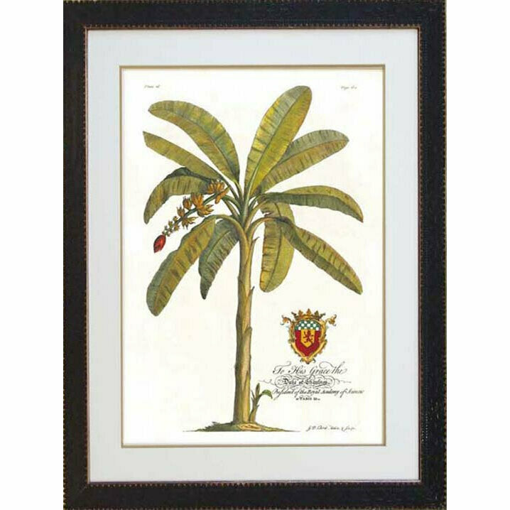 Royal Banana Palm 1 - Black