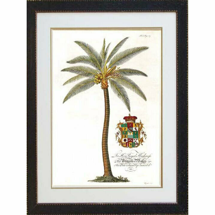 Royal Cocos Palm 2 - Black