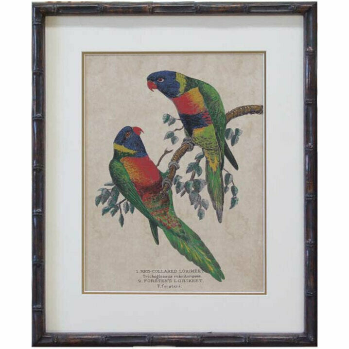 Lorikeet pair 1
