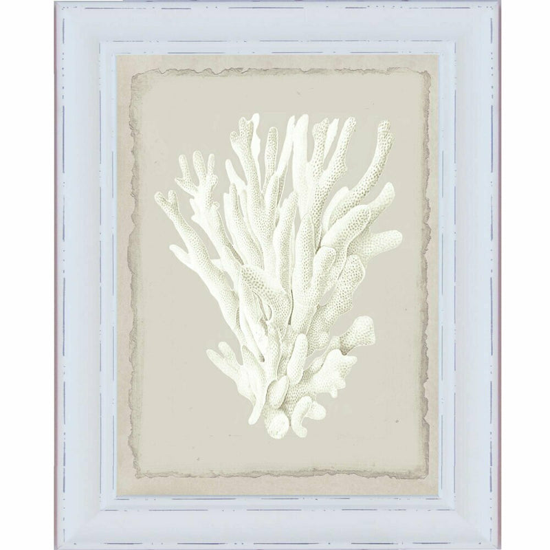 Hamptons White Coral Series 1