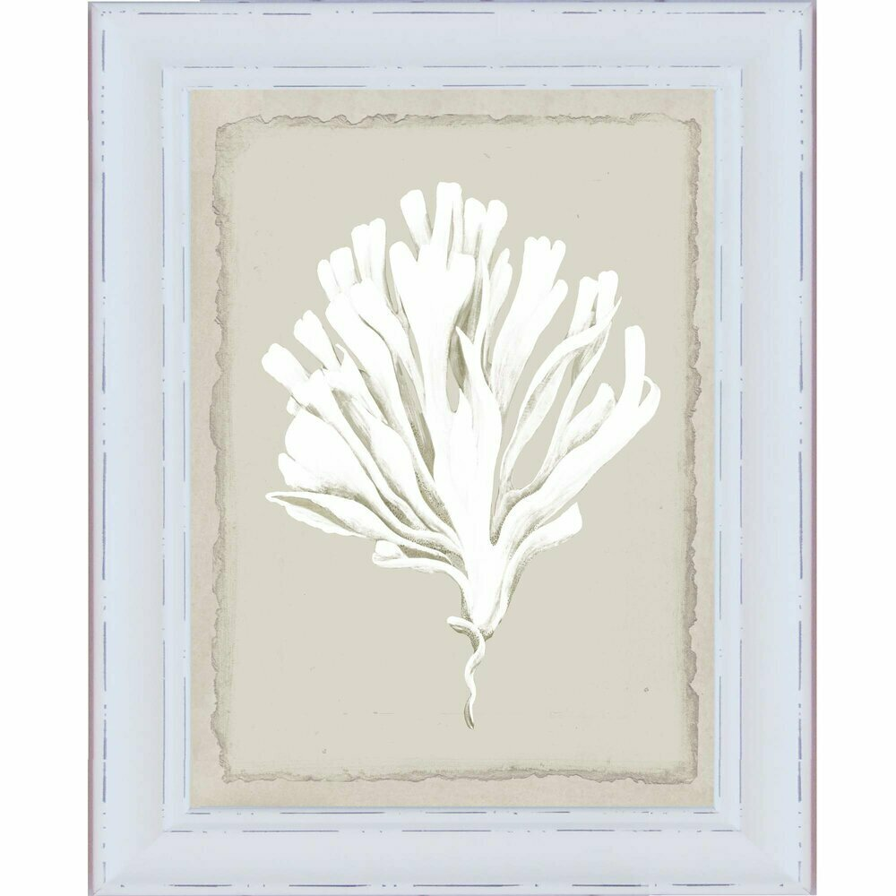 Hamptons White Coral Series 4