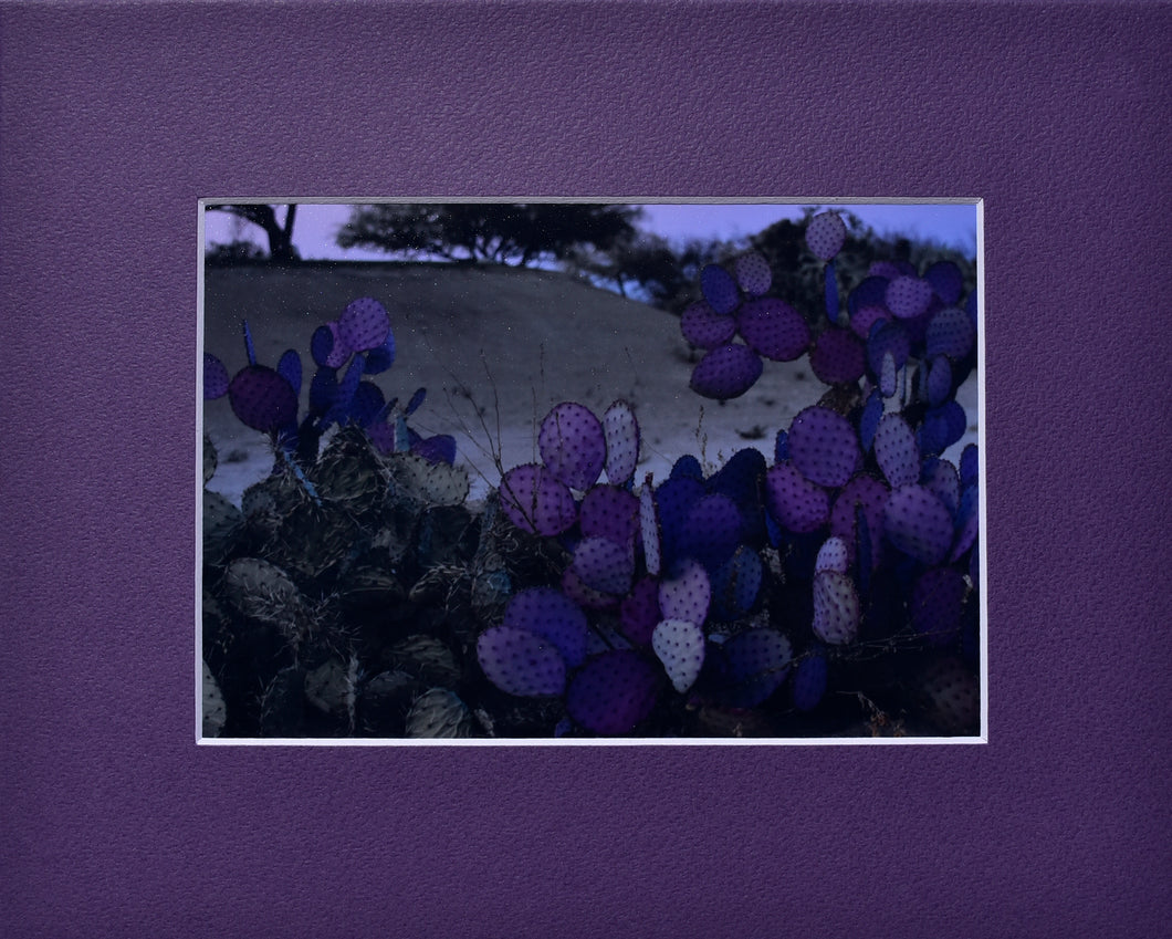 Arizona Green and Purple Cactus Fine Art Photography Matted Picture 8x10