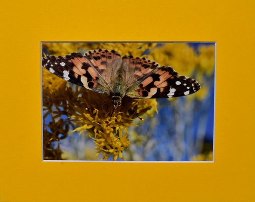Butterfly Animal Fine Art Photography Matted Picture 8x10