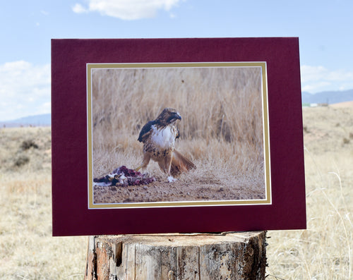 Bird With Prey 11x14 Fine Art Double Matted Photography