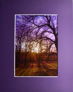 Sunset Through the Trees Landscape Fine Art Photography 8x10 Matted Print