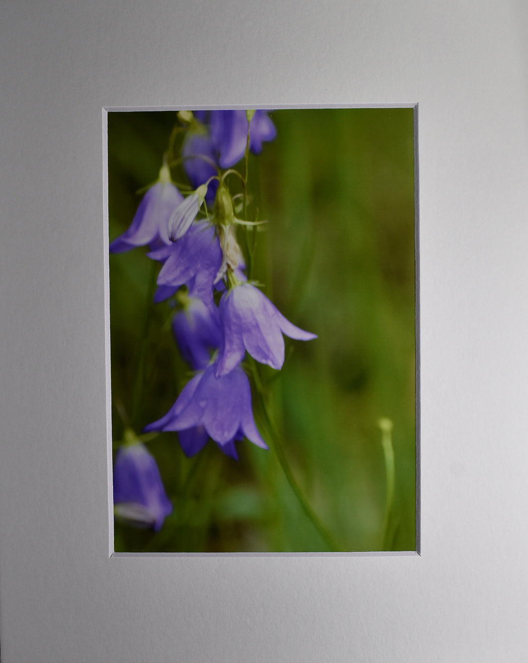 Wild Flowers 8x10 Fine Art Matted Picture