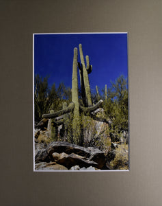 """Everyone Needs a Hug"" Desert Plant and Landscape Fine Art Photography 8x10 Matted Print"
