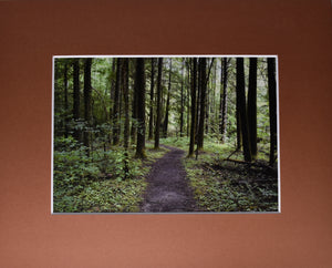 """A Walk Through the Woods"" 8x10 Matted Print Fine Art Photography"