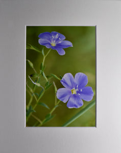 Wild Flowers Fine Art Photography 8x10 Matted Print