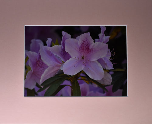 Wild Flowers Fine Art Photography Matted Picture 8x10