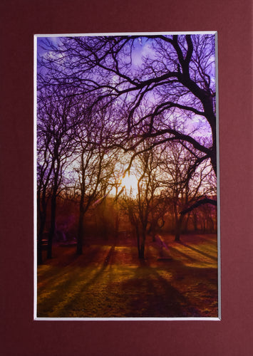 Sunset Forrest Landscape Fine Art Photography 5x7 Matted Print