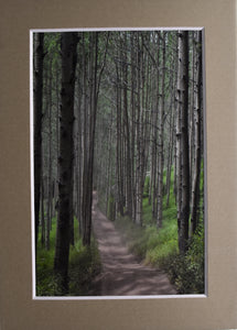 """The Road Less Traveled"" Road Through the Woods Landscape Fine Art Photography 5x7 Matted Print"