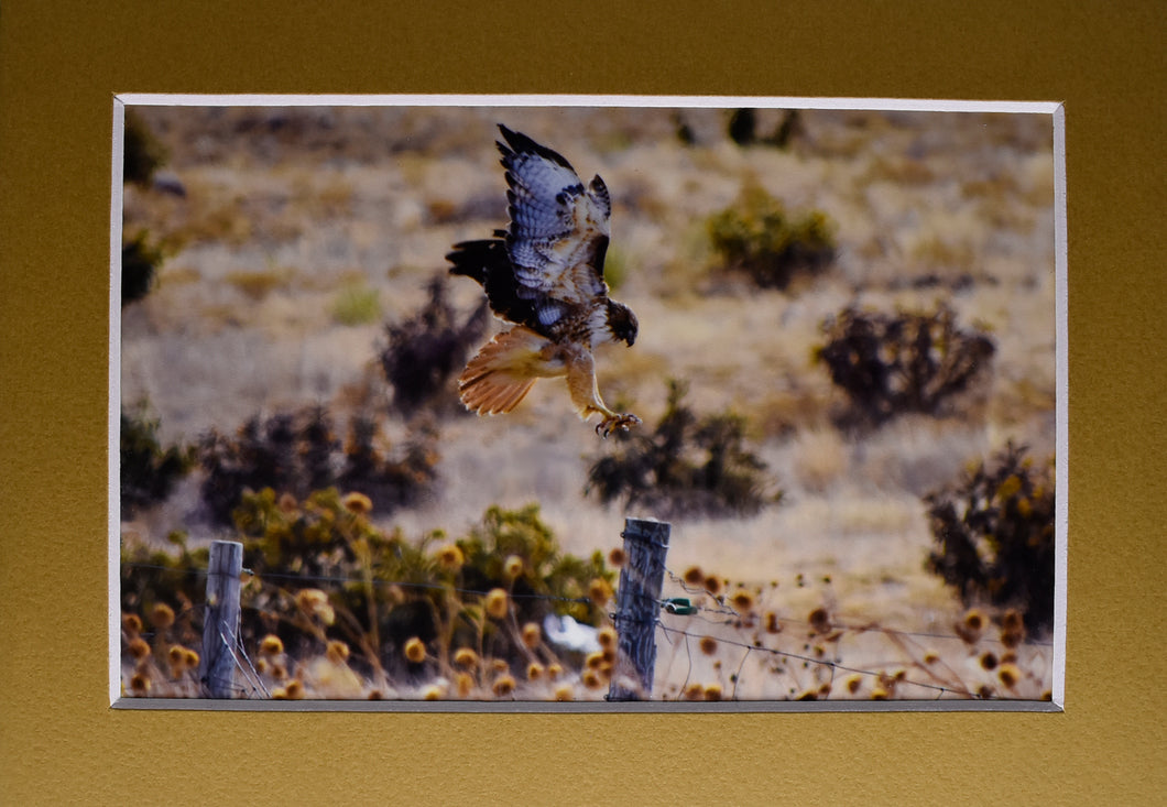 Bird of Prey Animal 5x7 Fine Art Photography Matted Picture