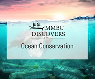 Image of a turtle swimming in an ocean with plastic bottles on the bottom and a plastic bag in its mouth. The word MMBC Discovers Live and Ocean Conservation are in the centre.