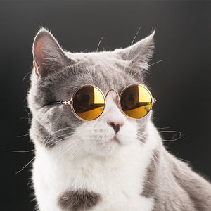 Fashion Cat Glasses For Small Cat Glasses  Pet Dogs Sunglasses