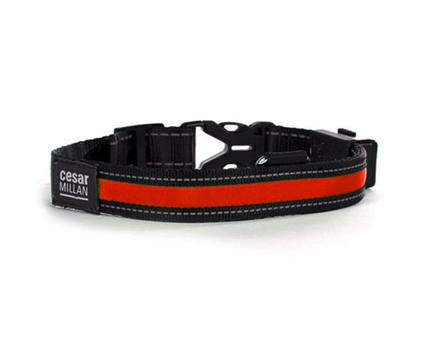 Cesar Millan Light Bright Collar & Leash